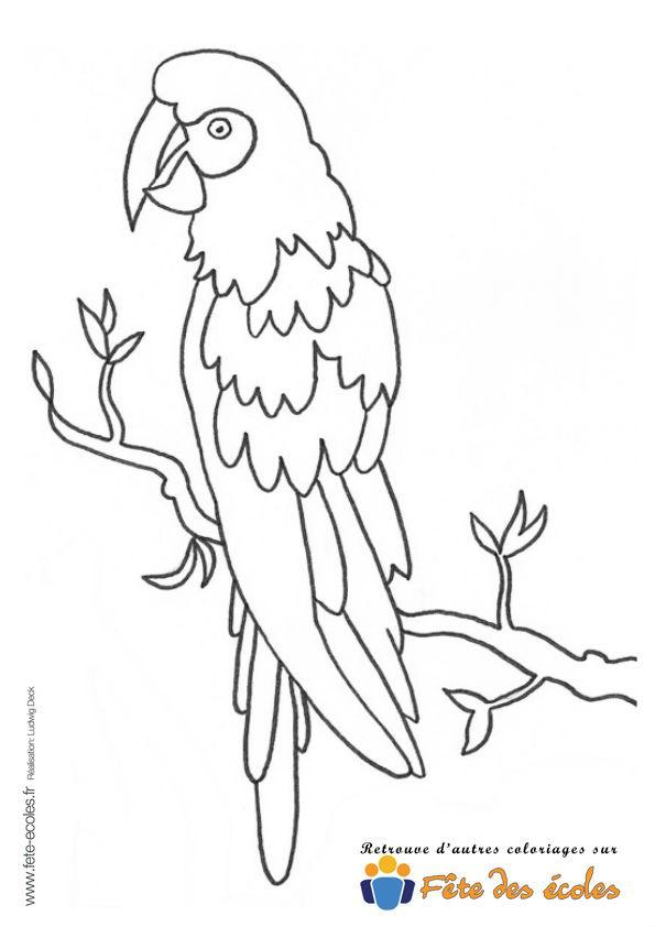 Le perroquet ara - Perroquet en dessin ...