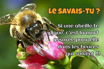 LE SAVAIS-TU ? : Les abeilles meurent après t'avoir piqué