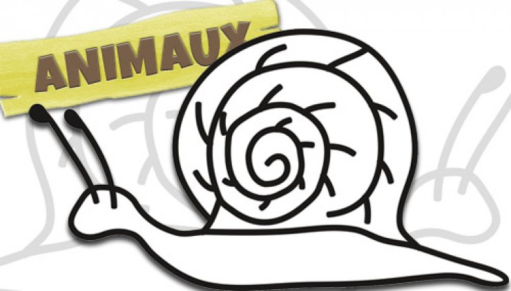 Coloriage d'un escargot
