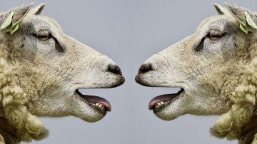 Anecdotes inutiles à savoir sur les animaux